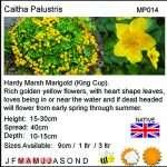 Caltha palustris (King cup or Marsh marigold) - Marginal Pond Plants - Pond Plants - Water Plants-18255