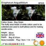 Eriophorum angustifolium (Cotton grass, Bog cotton, Scirpus angustifolius) - Marginal Pond Plants - Pond Plants - Water Plants-18275