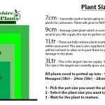 Euphorbia palustris (Marsh spurge) - Marginal Pond Plants - Pond Plants - Water Plants-3137