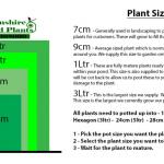 Phalaris arundinacea var picta (Gardener's garters) - Marginal Pond Plants - Pond Plants - Water Plants-1452